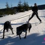 Skijöring – na běžkách taženi psy jako zážitek
