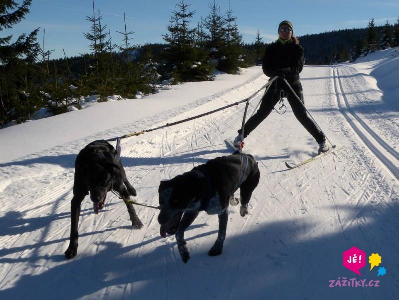 Skijöring - na běžkách taženi psy