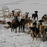 Vyjížďka se psím spřežením jako zážitek
